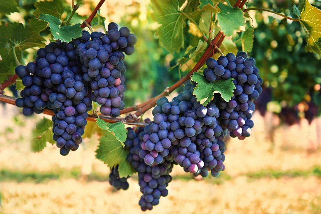 Dolio Winery